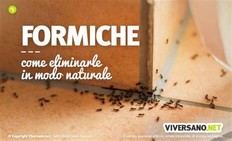 Eliminare Le Formiche by Come Eliminare Le Formiche Da Casa Trucchi E Rimedi
