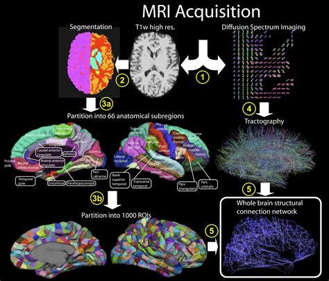 mind control language pattern pdf fmri versus dsi anthropology net