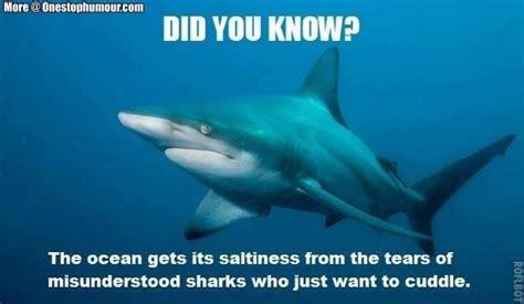 Shark Meme - shark week 2017 a collection of the funniest memes