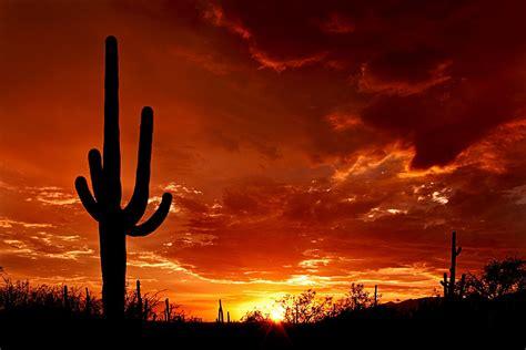 paint nite yuma az saguaro national park