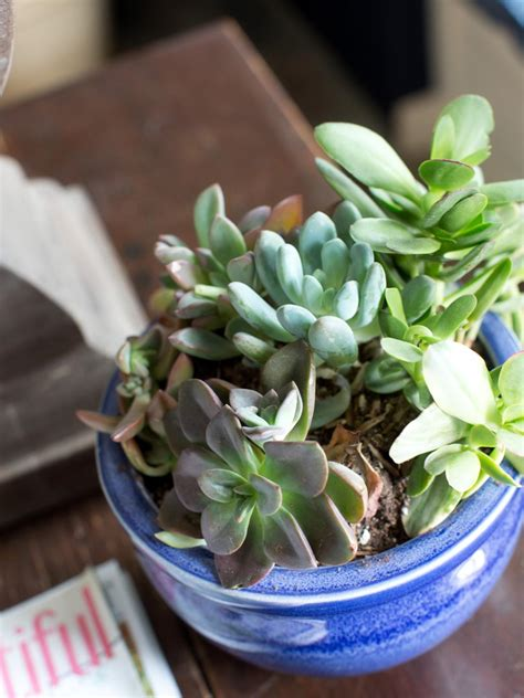 pruning and trimming succulents diy