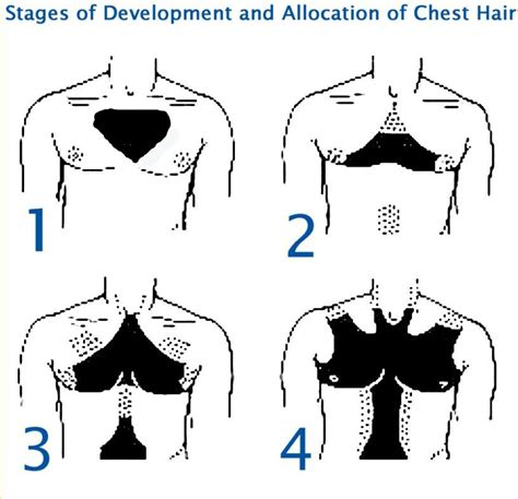 gents pubic hair styles gents what chest hair pattern do you have