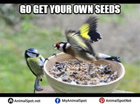Bird Meme - bird memes