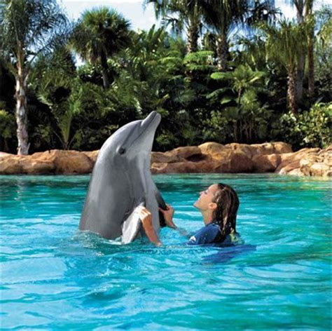discovery cove dolphin