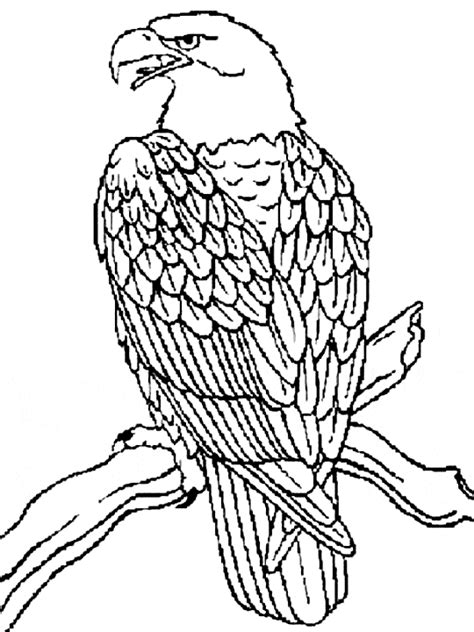 Eagle Coloring Page Eagle Free Printable Coloring Pages Coloring In Books