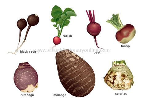 list of edible root food diet