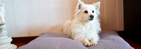 cuscini per cani grandi cuscini da divano dieci idee originali simpatiche e creative