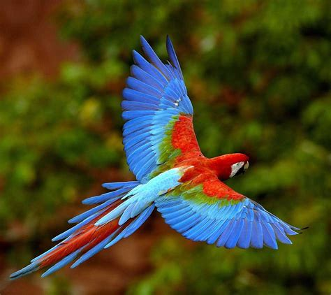 top 10 best pet birds list of beautiful birds