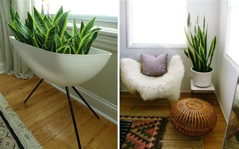 beneficios de decorar tu casa beneficios de decorar con plantas 191 por qu 233 deber 237 as