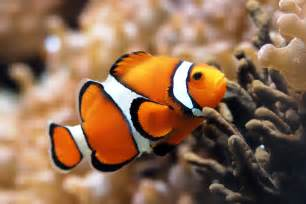 pictures of colorful fish top ten most beautiful and colorful fish all aquarium