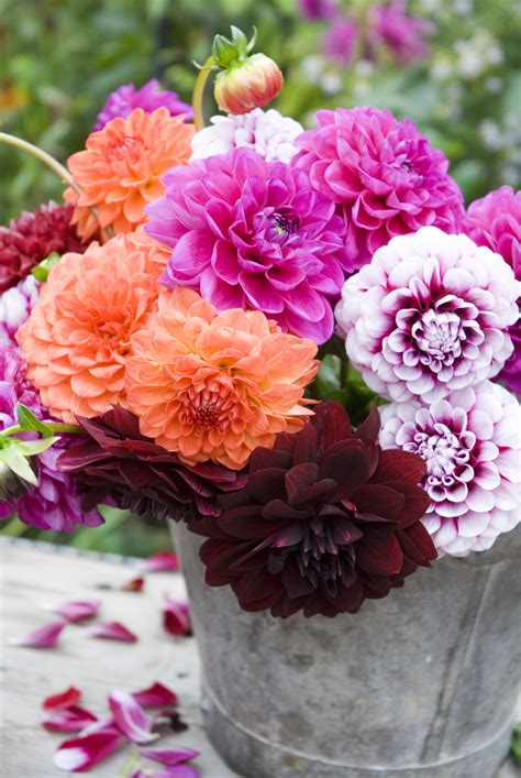 Types Of Garden Flowers Garden Flowers 10 Garden Flowers That Help To Sell Your Property Best Gardening Flowers