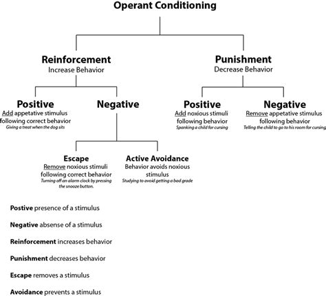 What Is The Difference Between The Four Types Of Mba by Difference Between Classical And Operant Conditioning