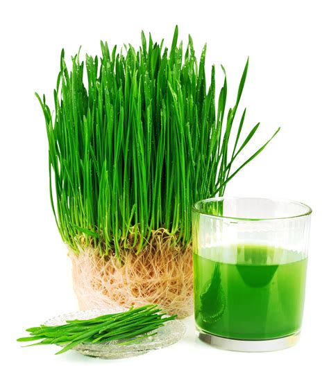 Juicer Wheatgrass best wheatgrass juicer holistic health path