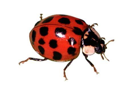 dream of bed bugs bug database hulett environmental service