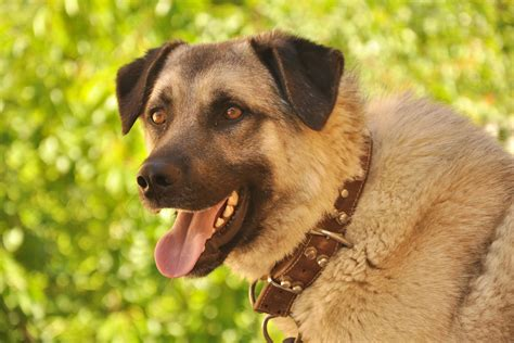 my is panting panting in dogs definition cause solution prevention cost