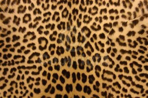 Jaguar Print Animal Print Desktop Backgrounds Wallpaper Cave