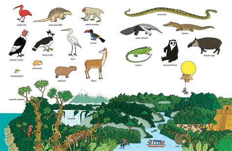 The Books Animal the big book of animals of the world kinder books