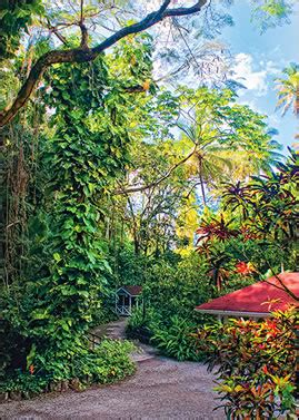 St Lucia Botanical Gardens Eastern Caribbean Gardens Travel With A Challenge