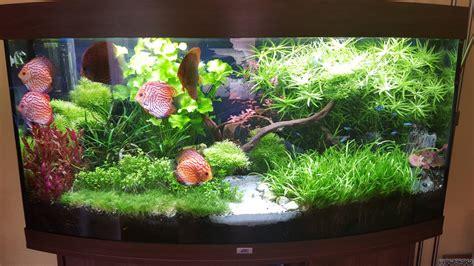 Aquarium Ohne Pflanzen Einrichten 6848 aquarium ohne pflanzen einrichten einrichtungsbeispiele f