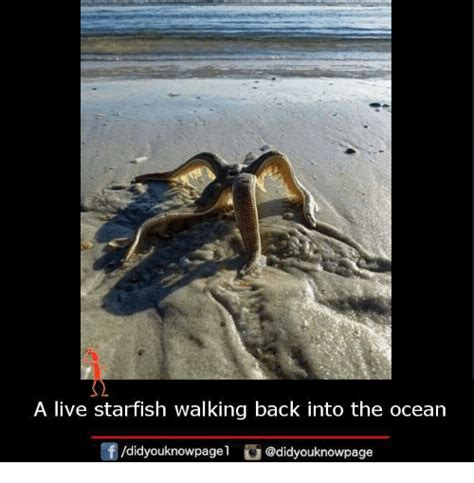 Starfish Meme - a live starfish walking back into the ocean orf