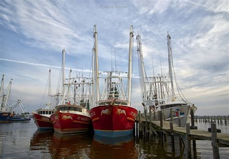 shrimp boat orange beach 15 best images about fishing on the gulf coast on