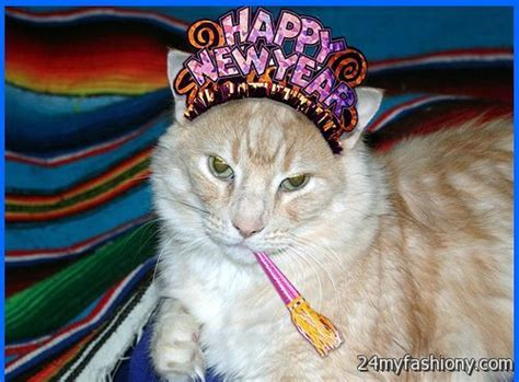 happy new year cat images 2016 2017 b2b fashion