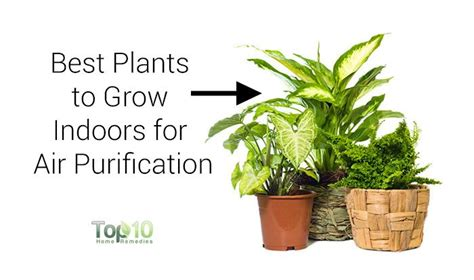 best flowers to grow indoors 10 best plants you can grow indoors for air purification