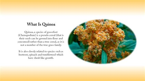 quinoa nutrition facts and benefits fitness tips exercise for seniors active ageing get