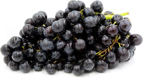 black seedless grapes information recipes and facts