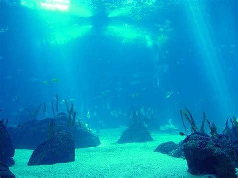 imagenes increibles bajo el mar foto bajo el mar 26 04 2008 22 19 15 fotos de nena