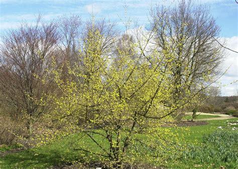 Garten Kaufen Auf Usedom by Pflanzen Kaufen Obstgeh 246 Lze Pflanzen Sortiment
