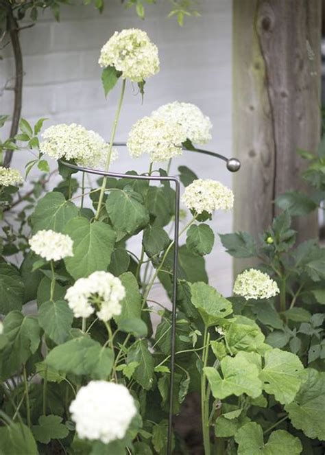 plant support hoops offer   supporting  garden