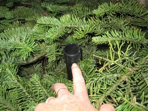 tree hacks christmas tree watering hack all