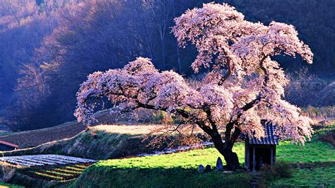 Beautiful Trees | the 18 most beautiful trees in the world