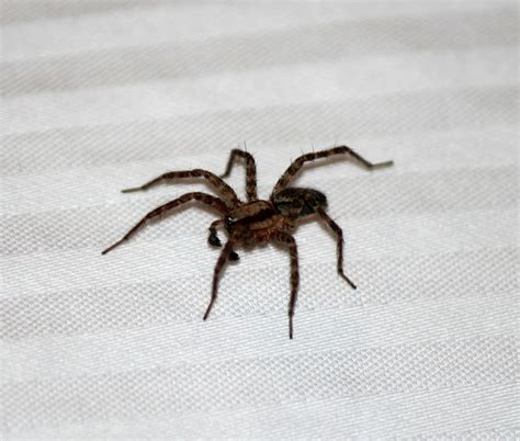 spider house events how to limit house spiders farm and dairy
