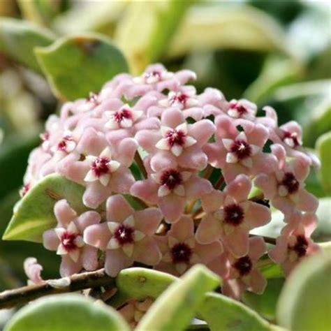 acquisto vasi on line vendita piante e fiori on line vaso in vetro e rosa