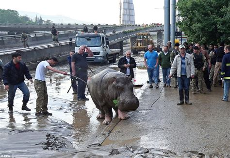 tbilisi search on for people zoo animals missing in georgia flood dozens of animals escape from a tbilisi zoo during an