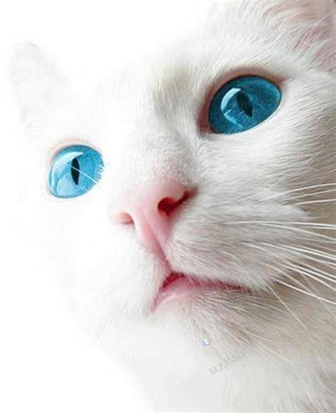 Dress Eye Catz schwanenstern