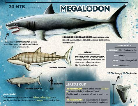imagenes reales de un megalodon megalodon on behance