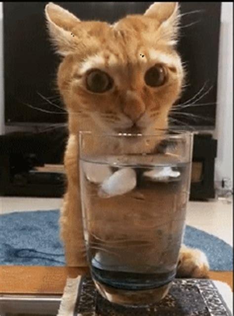 wann ist martini a drink cat gifs
