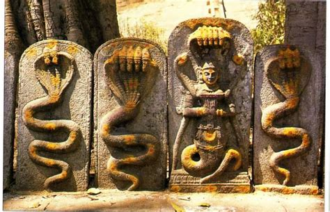 Teh Naga meaning in the year of the snake mystic