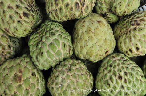 apple thailand fruits of thailand custard apple or sugar apple noi
