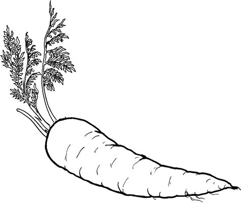 healthy color healthy food coloring pages food of carrot vegetable