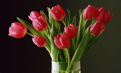 imagenes tulipanes naturales fondos de pantalla de tulipanes wallpapers de tulipanes