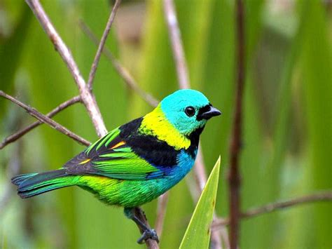 birds wallpaper wallpaper gallery bird wallpaper 8