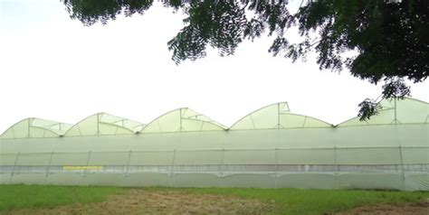 aj green house aj green house 28 images 5 x 5 predictions nfl week 13 the 5x5 truths aj green