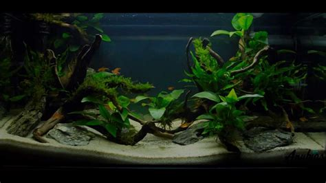 how to aquascape easy aquascaping youtube