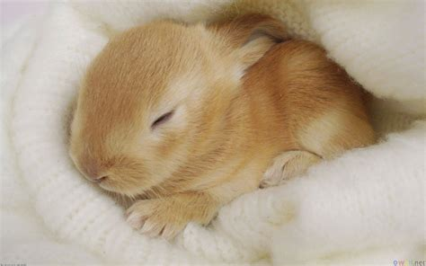 Very Cute Baby Animal Bunnies   Hot Girls Wallpaper