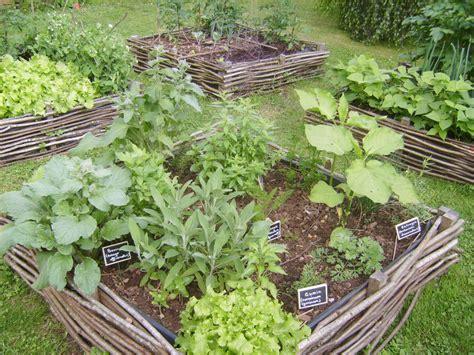 Délicieux Jardin De Plantes Aromatiques #7: 54200121.jpg