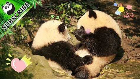 Free Hugs Panda panda theme pandas giving free hugs ipanda